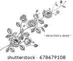 rose flowers drawing... | Shutterstock .eps vector #678679108