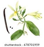 Watercolor Hand Drawn Vanilla...