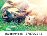 dog and cat best friends... | Shutterstock . vector #678702343