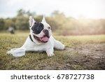 dog french bulldog looking... | Shutterstock . vector #678727738