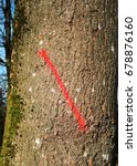 Small photo of tree; tree marking