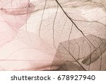 vivid color dry leaf texture... | Shutterstock . vector #678927940