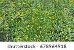 yellow caltha blooms in spring... | Shutterstock . vector #678964918