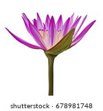 pink purple water lily flower...   Shutterstock .eps vector #678981748