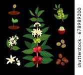 colorful botanical illustration ... | Shutterstock .eps vector #678989200