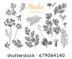 fresh herbs and spices isolated ... | Shutterstock .eps vector #679064140
