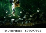 underwater photo of common... | Shutterstock . vector #679097938