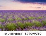 beautiful lavender fields in a... | Shutterstock . vector #679099360
