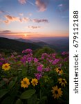 Wildflowers At Sunset In The...