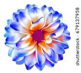 luxurious blue red garden...   Shutterstock .eps vector #679137958