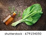 bottle of plantain infusion or... | Shutterstock . vector #679154050