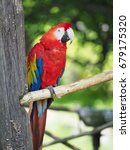 scarlet macaw in forest | Shutterstock . vector #679175320