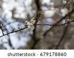 white flower | Shutterstock . vector #679178860