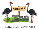 ostriches at the zoo... | Shutterstock .eps vector #679216804