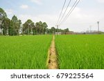 rice paddy in the farm .... | Shutterstock . vector #679225564