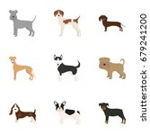 vector illustration of dog... | Shutterstock .eps vector #679241200