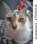 closeup of cute cat face | Shutterstock . vector #679242418