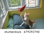 Stock photo cat playing have fun 679292740