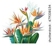 floral bouquet with strelitzia... | Shutterstock . vector #679338154