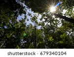 tropical forest with sun flare | Shutterstock . vector #679340104