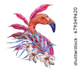 pink flamingo  feathers  exotic ... | Shutterstock . vector #679349620
