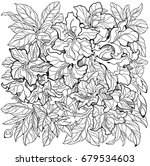 azalea flowers line art drawing.... | Shutterstock .eps vector #679534603