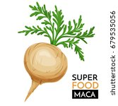 maca vector icon. healthy detox ...   Shutterstock .eps vector #679535056