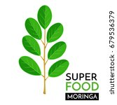 moringa vector icon. healthy... | Shutterstock .eps vector #679536379