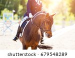 Close Up Image Of Horse With...
