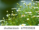 daisies with a lake backdrop