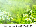 picture with wild flowers and... | Shutterstock . vector #679561159