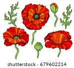 red poppy flowers | Shutterstock .eps vector #679602214