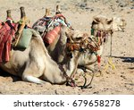 A Pair Of Camels Resting On Th...