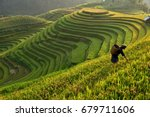 Morning Light Of Rice Field On...