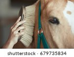 woman grooming horse in stable | Shutterstock . vector #679735834