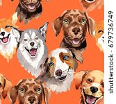exotic dog wild animal pattern... | Shutterstock . vector #679736749