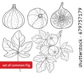 vector set with outline common... | Shutterstock .eps vector #679757179
