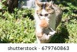 cat with little kitten | Shutterstock . vector #679760863