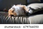 orange sleeping persian cat | Shutterstock . vector #679766050