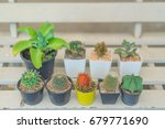 Small photo of rambutan among cactuses, dare to be different, being a different concept with red rambutan among cactuses, Think difference, Originality is a mark of genius, be yourself