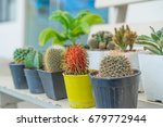 Small photo of The rambutan among cactus, dare to be different, being a different concept with red rambutan among cactus, Think difference, Originality is a mark of genius, be yourself