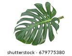 green leaf isolated on white... | Shutterstock . vector #679775380