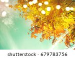autumn leaves | Shutterstock . vector #679783756