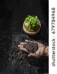 handle soil and plant green... | Shutterstock . vector #679784968