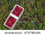 basket with fresh cranberries... | Shutterstock . vector #679788184