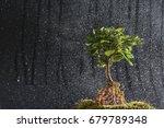 spring rain raining and... | Shutterstock . vector #679789348