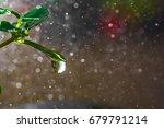 fresh green grass with dew... | Shutterstock . vector #679791214