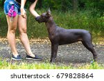 mexican hairless dog ... | Shutterstock . vector #679828864