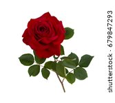Stock photo dark red rose isolated on white background 679847293
