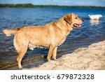 labrador retriever dog on beach | Shutterstock . vector #679872328